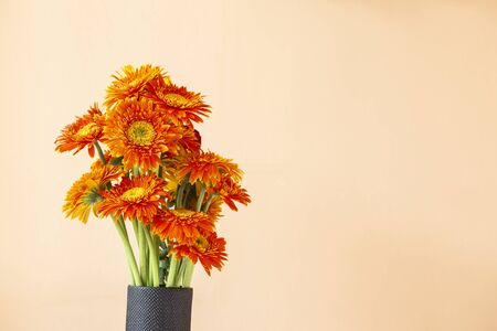 Beautiful oranage daisy flower in black ceramic vase with space on yellow background, house decoration