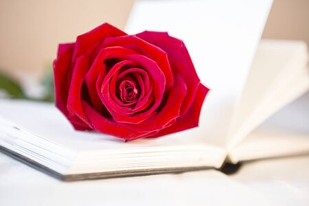 Beautiful fresh red rose on blank white notebook, love and romance idea, valentine concept