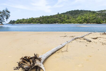 Dead dry tree on the beach, blue sea and green island with sand beach, holiday and vacation destination, summer concept, travel and tourism business, Phuket Island, Thailand