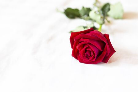 Red rose on white bed, love and romance concept, Valentine background