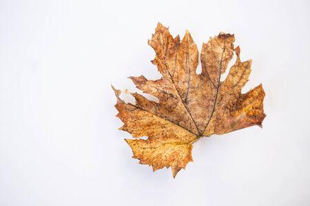 Dry grape leaf isolate on white background, autumn and winter season symbol Stok Fotoğraf