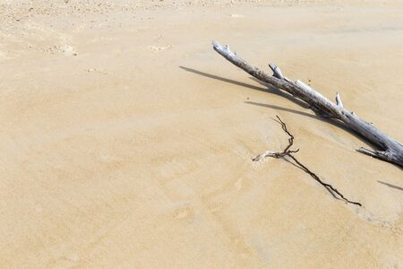Dry tree on sand beach, environmental background, nature concept, summer outdoor day light