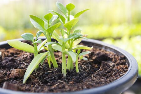 Young plant growing in the pot over blurred green garden background, outdoor day light, growing and new life concept, organic farming Stok Fotoğraf
