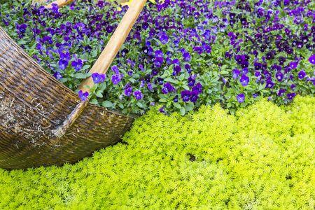 Beautiful garden design, outdoor day light, summer and sping season