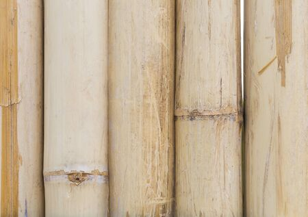 Closeup dry bamboo wood background, nature wood texture background, tree pattern detail