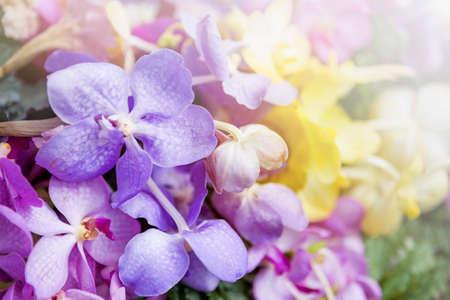 Colorful orchid flower background, nature concept background, spring or summer season garden Stok Fotoğraf - 154988614