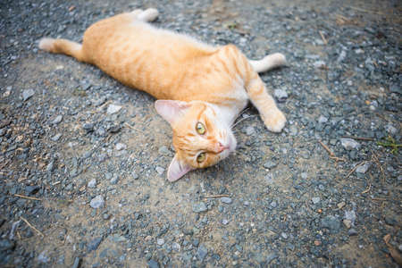 Cat playing on the ground, outdoor day light Stok Fotoğraf - 155340541