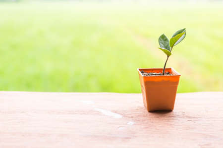 Orange plant pot over blurred green garden background, outdoor day light, young plant growing in plant pot, eco concept Stok Fotoğraf - 155341559