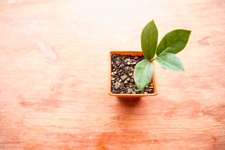 Young plant growing in small square shape pot with space on orange cement background, decoration plant pot Stok Fotoğraf - 155443113