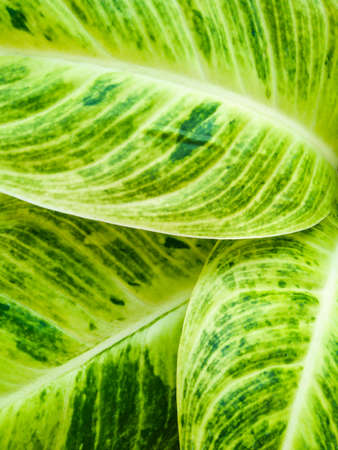 Closeup fresh green leaf background, nature texture, outdoor day light Stok Fotoğraf