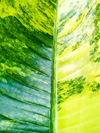 Closeup natural leaf pattern background, leaf texture background Stok Fotoğraf
