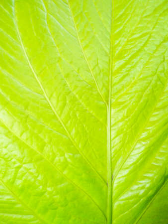 Closeup green leaf texture background, nature pattern background Stok Fotoğraf