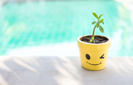 Smiling yellow plant pot with young plant over blurred blue water background, outdoor day light, home decoration item
