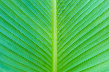 Closeup green leaf pattern background, nature concept background, leaf texture, outdoor day light Stok Fotoğraf