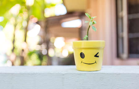 Smiling plant pot with young plant on the fence over blurred background, outdoor day light, gardening at home