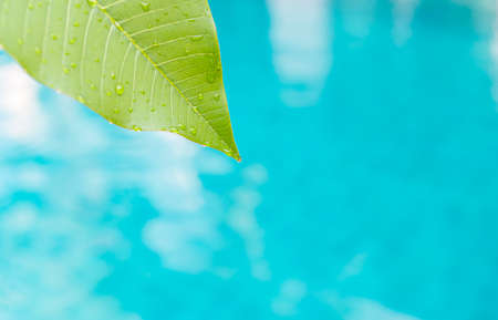 Closeup fresh green leaf with water drop over blurred blue water background, environmental concept, nature background