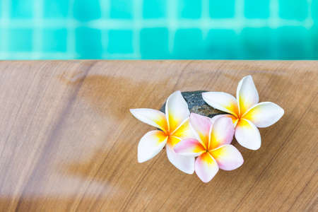 Beautiful fresh Plumeria flower on swimming pool edge, tropical flower, summer and spring season concept, spa and wellness