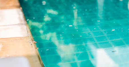 Organic dirt and dust floating on swimming pool surface during summer time in Thailand, swimming pool problem and service, outdoor day light Stok Fotoğraf