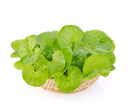 Centella asiatica, Asiatic Pennywort  in basket