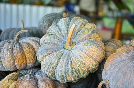 Fresh Pumkin in local market.vegetable high Beta carotene ; good for health.