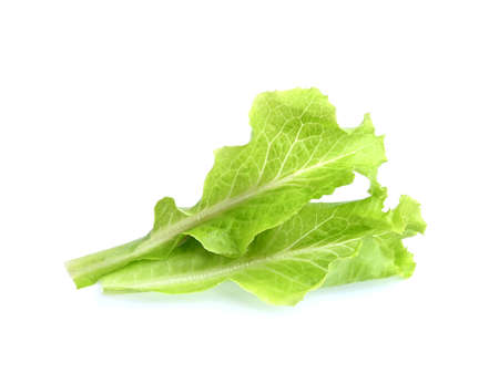 Fresh and green lettuce on white background, food concept;salad food.