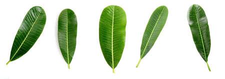 Set of Close up of Plumeria or Frangipani (tropical flowers, Hawaiian Lei Flower) on white background. Stock fotó
