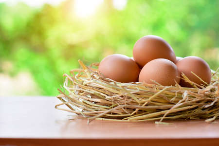 Eggs placed in a nest made from straw on wood table and nature background with copy space