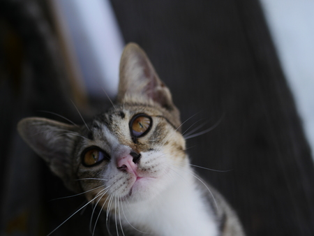 Young tabby cat looking up to the right