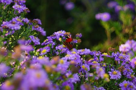butterfly on purple flower with wonderful bokeh