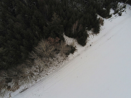 Aerial view over tree tops in winter season in the alps