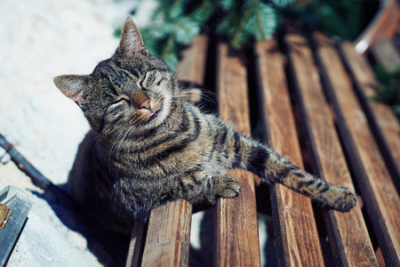 A gray cat sits on a wooden bench near the house.
