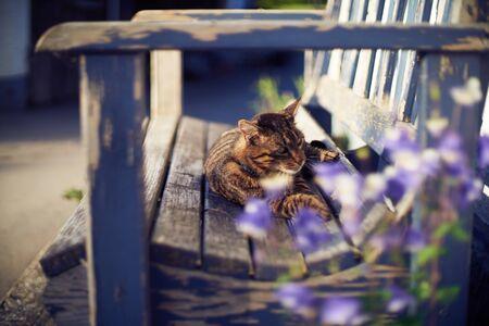 She is enjoyin the sunshine and life