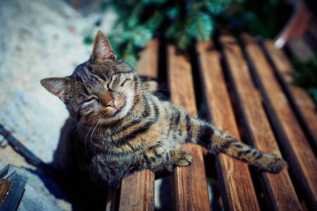 A gray cat sits on a wooden bench near the house. Stock Photo - 133050010