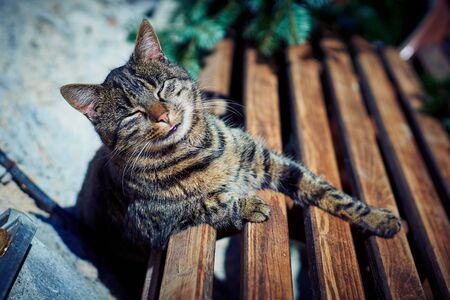 A gray cat sits on a wooden bench near the house. Stock Photo - 132078798