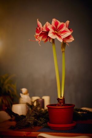 Red white Amaryllis flower on seamless wallpaper pattern