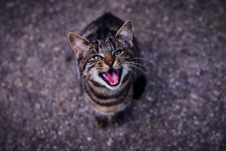 I want something to eat. my cat yelling for her food Stock Photo - 132079742