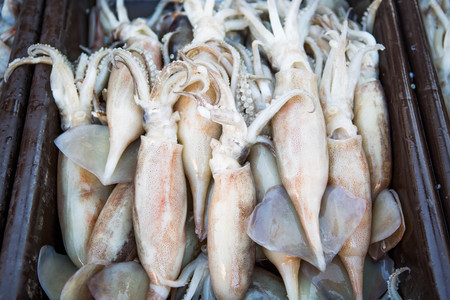 tempter: freeze squid after defrosted