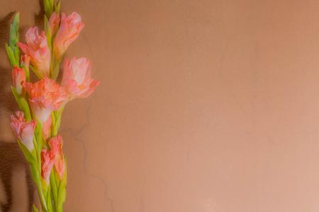 gladiolus: Twink Filter : Pink Gladiolus Blur for background