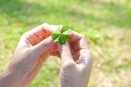 four leaf: Four leaf clover , lucky leaf Stock Photo