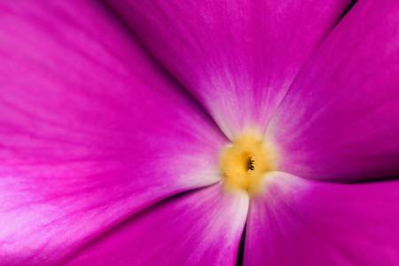 pink floyd: cosmos flower