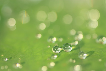 Lotus leaf with water drops effect green, drops of dew on a green grass Banco de Imagens