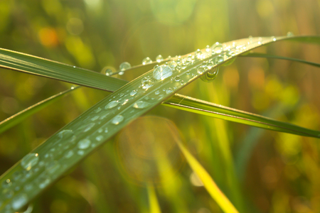drops of dew on a green grass , fresh morning