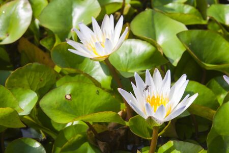 image of a lotus flower on the water