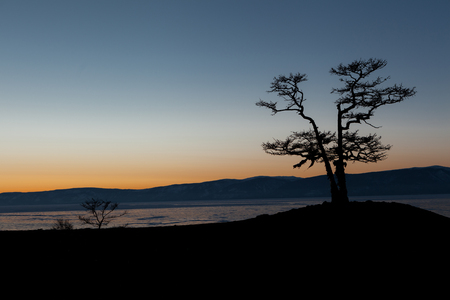 Nice silhouette of pine trees during sunset moment at Olkhon island in frozen Baikal lake,Siberia,Russia Zdjęcie Seryjne