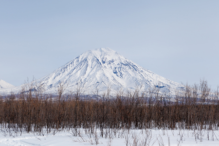 Beautiful Snow mountain with lines of brown trees in winter at kamchatka peninsula in cloudy day,Russia Zdjęcie Seryjne