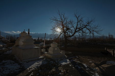 Silouhette of tree and stupas before sunset