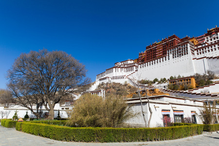 A big tree at beautiful green bush corner of the garden and old building in front of Potala palace with clear blue sky,Lhasa,Tibet,China