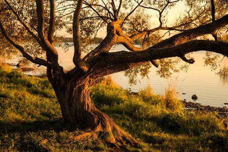 Árbol extiende sus ramas en torno a lo largo de la orilla del río