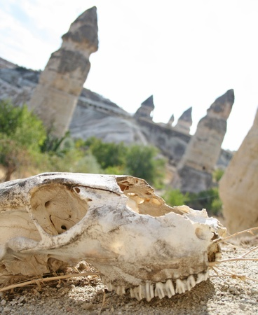 A skull in the desert with ferry chimneys  photo