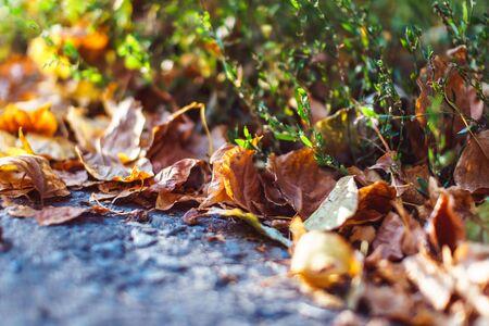 Autumn preparation concept. Season specific. Blurred underwood close up. Banco de Imagens